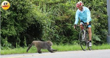 【陽明山大王3】遊客餵食釀禍 翁遭猴襲小腿濺血