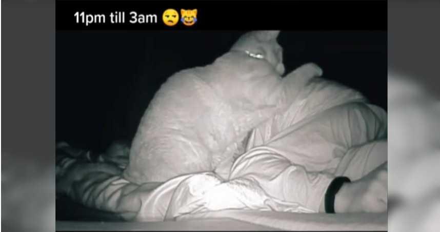 主人睡醒天天疲倦!查看監視器驚見:愛貓半夜猛揍她4小時