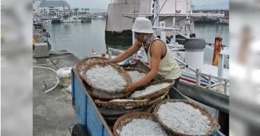 新北魩鱙禁漁 違規最重可罰十五萬元