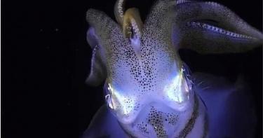 外星怪物住海底!俄羅斯漁民捕獲奇特海洋生物 PO網狂吸62萬粉