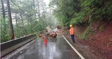 最強梅雨炸台!南投仁愛暴雨多處坍方 中橫2樹木壓毀電線407戶停電