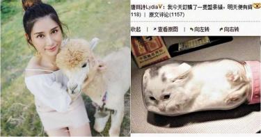 把貓塞進奶瓶還拍照上傳炫「盆景貓」 女星虐行被轟翻:超無腦!