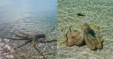 海中驚見「巨大海怪」!男好奇近看...下秒遭攻擊「留紅腫血痕」