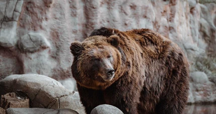 日男遛狗突遭熊猛烈攻擊 「右手骨折」送醫後無生命危險