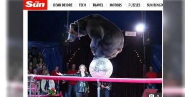 表演到一半…棕熊突失控攻擊女馴獸師 馬戲團:熊正處交配季節
