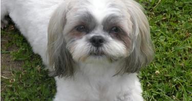 18歲少女剁掉「奶奶愛犬頭顱」!心臟切塊放冰箱 詭異冷笑:狗很冷