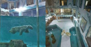 哈爾濱酒店裡飼養北極熊 推出「與熊共眠」活動遭動保人士抨擊