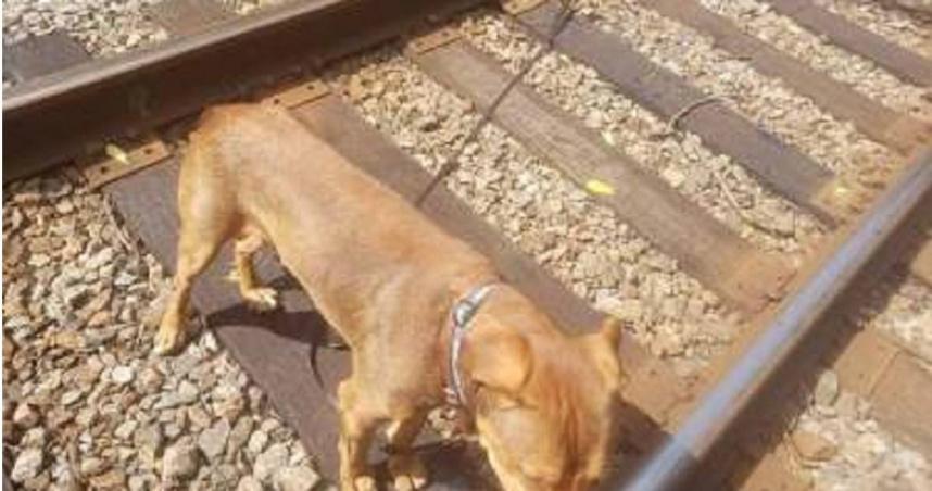 狗狗遭「綁鐵軌中央」繩索越拉越緊 他聽見怪聲查看氣炸:根本要牠死