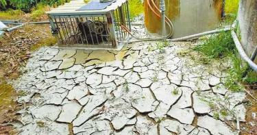 芒果都是空包彈!疑缺水影響 農民抽水都是爛泥沙