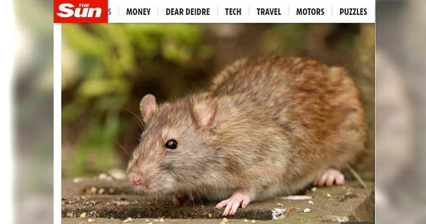 公園散步草叢突竄百隻老鼠 女四肢遭咬受傷