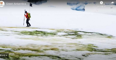 拉警報!氣候變遷讓南極變「綠」 藻類快速生長連外太空都看得見