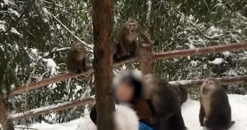 山上被一群潑猴包圍! 妹子慘遭霸王硬上「扒衣撕咬頭髮」叫不停