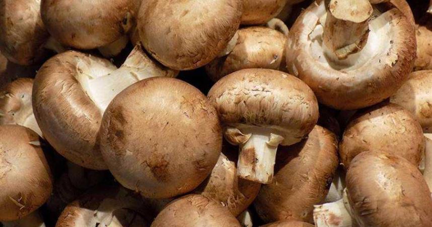抽檢市售蕈菇7成2不合格 嚴重恐致胎兒腦部缺陷