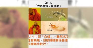 梅雨季白蟻「分飛求偶」 專家:和蟑螂較相近
