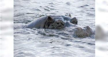 男童湖邊玩耍遭「河馬」狠咬拖進水中亡 目睹居民崩潰驚恐尖叫